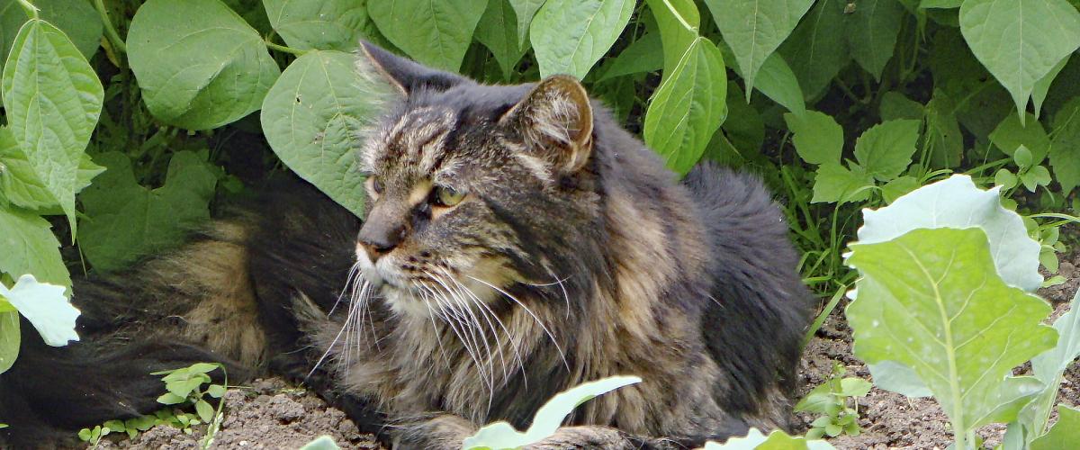 Permalink auf:Herzerkrankungen Katze